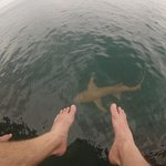 friendly nurse shark :)