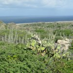 The east side of the island with all the cactus growth and the big waves