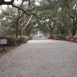 Árvores no Parque
