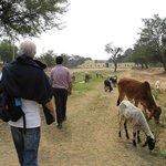 we walk to the Samode garden ..