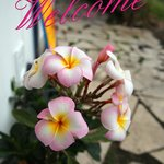 Plumeria Welcome