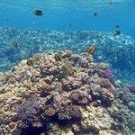 reef davanti al fanara