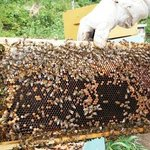Our bees to be visited in the valleys of Mindo Cloud Forrest