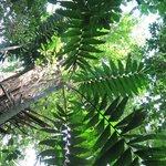 Rainforest of private preserve