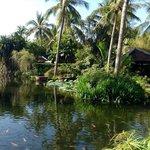 Le lagon entre l'hôtel et la piscine, devant la terrasse du restaurant