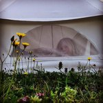 peeking out the bell tent