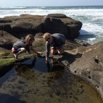 Exploring the tide pools.
