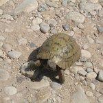 Tortoise nearby