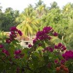 Цветочки на балконе
