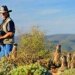 Dave y las suricatas