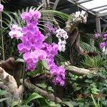 Zachwycający świat orchidei
