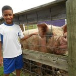 Visit the friendly animals at the Petting Farm