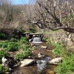 Water bridge in botanical garden