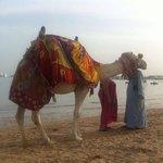 Oscar the Camel