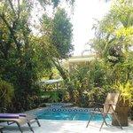 Pool & trees where monkeys came down
