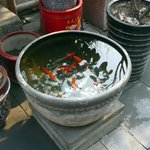 Fish at the Hutong house