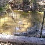 gators !