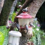 More bird feeding in the back garden