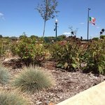 Public wildflower gardens across from welcome center & next to the Rock River National Scenic an