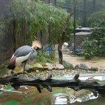 Вольер с птицами
