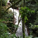 Waterfall/river in the rain-forest (Miravalles)