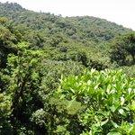 Canopy in Monte Verde