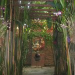 Beautiful pathways and orchids everywhere