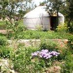 Boz uy, Yurt 1 in garden