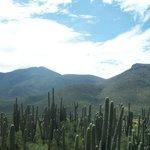 Tehuacan-Cuicatlan Biosphere Reserve