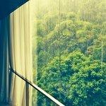 Suite room window view