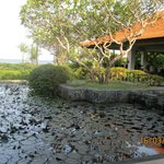 view of pond from hotel lobby
