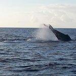 whales in Deshaies ( aboard Keila)