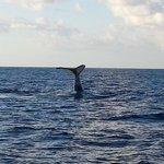 Rencontre baleine à bord de Keila à Deshaies