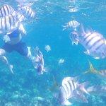 Take an underwater camera!!!!