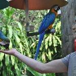 feeding the parrots