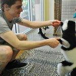 Lemur encounter