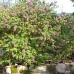 Casale Nunziatina Garden