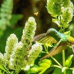 Hummingbird, view from patio