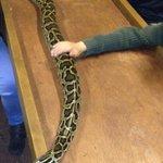 smaller python