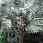 Exotic Palm tree