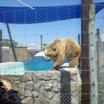 a bear greets a visitor