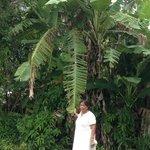 Mom at A Villa Gail- enjoying the bannana trees