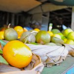 Variety of citrus fruits @ the Coconut Experience