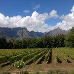 Thelema Vineyards Stellenbosch
