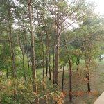Woods view from our room