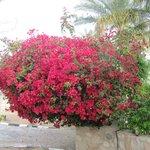 Территория Домины утопает в цветущих кустарниках