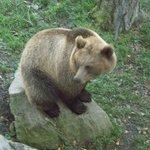 Skansen Bear