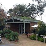 Succulent roof
