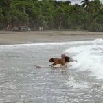 Surfing with my dog
