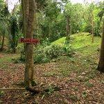 Maya runis